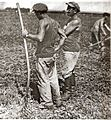 PikiWiki Israel 12214 Working the fields of Kibbutz Givat Hashlosha.jpg