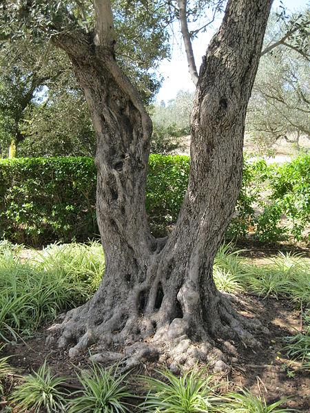 עצים ברמת הנדיב