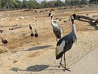 PikiWiki Israel 53079 wildlife animals.jpg
