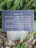 PikiWiki Israel 53345 montefiore tree in the tropical garden in tel aviv.jpg