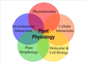 Ett Venn-diagram över förhållandena mellan fem viktiga områden för växtfysiologi