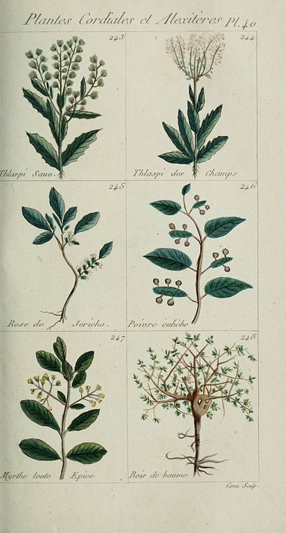 File plantes usuelles indig nes et exotiques pl 40 for Plante exotique