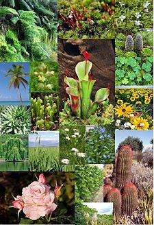 Flora - Wikipedia