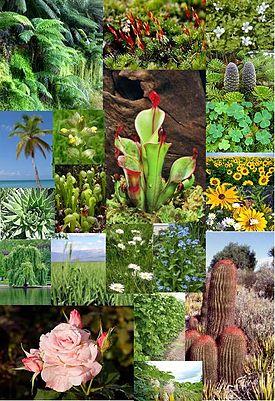 -tumbuhan merupakan salah satu obyek yang dipelajari oleh ilmu alam