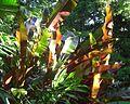 Plants 8 Cairns.jpg
