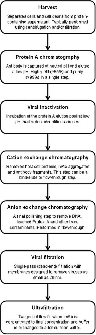 Protein A - This process flow diagram shows how monoclonal antibodies are typically purified at industrial scale.