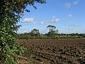 Ploughed Field, Rookery Farm, near Norton Heath - geograph.org.uk - 67951.jpg