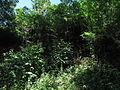Pod Šibeničním kopcem (004).jpg