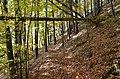 Poertschach Bannwaldweg im Herbst 20102013 624.jpg