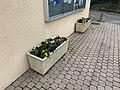 Pot Fleurs Place St Cyr St Cyr Menthon 4.jpg