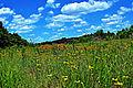 Prairie Flowers @ Menomin Park, Menomonie, WI (5909551409).jpg