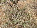 Prehistoric pandava graves 03.jpg