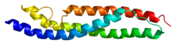 Protein ACTN4 PDB 1wlx.png