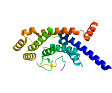 Protein TINF2 PDB 3BQO.png