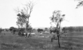 Queensland State Archives 4174 Scenes on farm of Mr Davidson Beenleigh September 1933.png