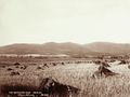 Queensland State Archives 5183 Yangan Warwick 1899.png