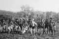 Queensland State Archives 5800 Dancers Palm Island June 1931.png
