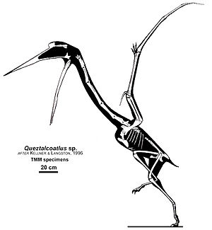 Quetzalcoatlus - Skeletal reconstruction of Q. sp.