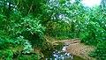 Río de los Negros, Corozal, Puerto Rico.jpg