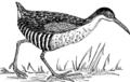 Rail - Bird 1 (PSF).png