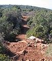 Ramat-ha-Nadiv-manor-trail-747.jpg