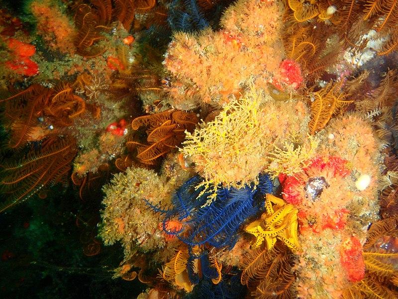 File:Reef invertebrates at Ark Rock P9211479.JPG - Wikimedia Commons