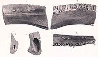 Regnosaurus.jpg