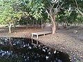 Reserva Natural Laguna de Mallén.jpg