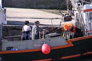 Retour de la pêche à la seiche du fileyeur Jason IV (22).JPG