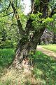 Rhododendronpark in Wachwitz; Sachsen ..2H1A5213WI.jpg