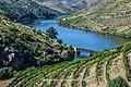 Rio Douro, desembocadura del rio Côa.jpg