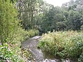 River Medlock - geograph.org.uk - 58149.jpg