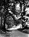 Road in the Olympic Peninsula, Washington, ca 1924 (WASTATE 876).jpg