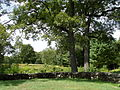 Robert Treat Paine Estate - grounds view.JPG