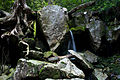 Rocks-tree-roots-spring-forest - West Virginia - ForestWander.jpg