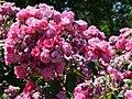 "Rosa ""Angela"" o KORday. 03.jpg"