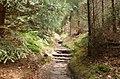 Rotkehlchenstiege - Elbsandsteingebirge - panoramio (4).jpg