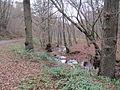 Ru de Chawion dans le bois de Staneux, le long de l'avenue Princesse Clémentine.JPG