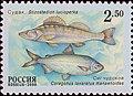 Russia stamp 2000 № 629.jpg