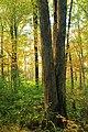 Ruth Zimmerman Natural Area (Autumn Visit) (5) (15514497042).jpg