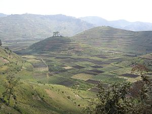 Rwanda is the most densely populated country i...