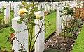Südfriefhof Köln - Commonwealth cemetery - Grabsteine mit Rosen (8872-74).jpg