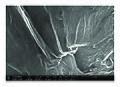 SEM-micrographs-of-GO-a-and-rGO-b-the-heat-treated-GO-c-and-the-heat-treated-rGO-d.jpg