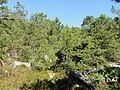 Saint-Pierre-lès-Nemours (77), le Mont Sarrasin par le GR 13, sens est-ouest 9.JPG