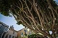 San Francisco Mission Tree houses 8582979716 o.jpg