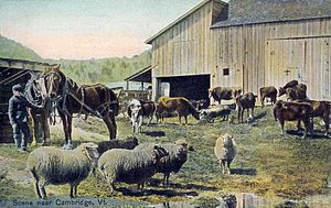 Cambridge, Vermont - Farm scene c. 1908