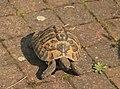 Schildpad.jpg
