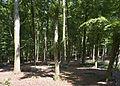 Schleswig-Holstein, Brickeln, Landschaftsschutzgebiet Papenknüll Brickeln NIK 6690.JPG