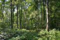 Schleswig-Holstein, Kellinghusen, Landschaftsschutzgebiet Waldfläche bei Kellinghusen NIK 1277.JPG
