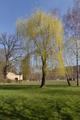 Schlitz Schlitz Damenweg Mar Salix.png